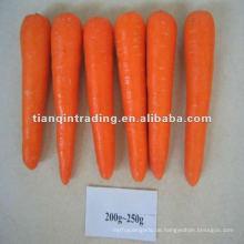 frische rote Karotte für Südkorea