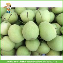 Boa Qualidade Frio Armazenamento Fresh Shandong Pear