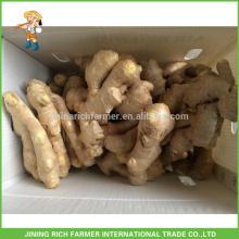 Jengibre fresco exportador de jengibre chino 200g hasta la caja de PVC