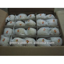 china new crop fresh ya pear
