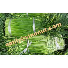 Nuevo tallo de ajo fresco 200g / paquete