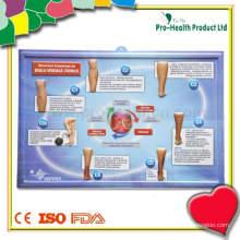 3D geprägtes medizinisches Diagramm für das Unterrichten
