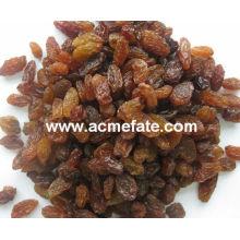 best price red raisin from China