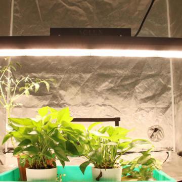 Farmacêutica vertical, linear, led, indoor, crescer, luz led