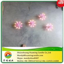 Chrysanthemum velas de aniversário