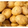 Yellow big Fresh Holland potato with good taste