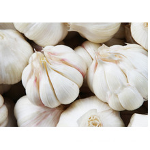 EU standard Fresh natural organic Hybrid garlic Yunnan pollution free garlic