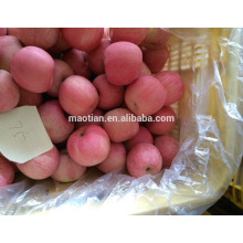 Rosy Blush New Season Fuji Apple