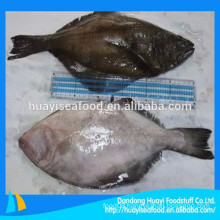 price for nice quality frozen new landing flounder fish