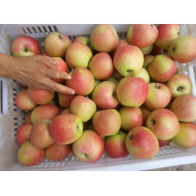 Shannxi Gala Apple