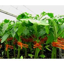 Hochwertiger roter Kunststoffclip für die landwirtschaftliche Veredelung