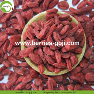 Perdre du poids Natural Dried Nutrition Tibet Wolfberry