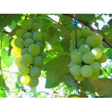 Frutas Conservas De Uva Em Xarope Light / Heavy (China)