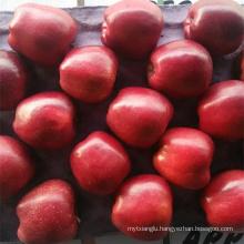 Tianshui wangrun apple round apple wholesale natural round apple