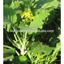 MPK22 Catian good flavor pakchoi seeds f1 hybrid for planting