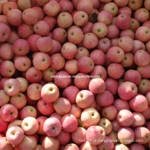 De Boa Qualidade Fresh Qinguan Apple, Fresh Apple