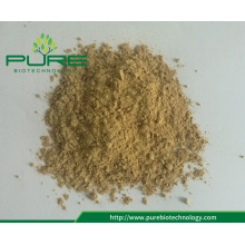 New Crop Dehydrated Instant Ginger Powder