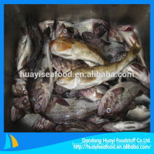 IQF fat greenling fish