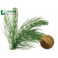 Longze Direct Horsetail Extract Equisetum arvense bereitstellen
