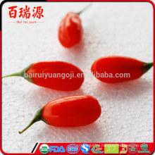 China blushwood berry Ningxia goji baya dragón hierbas goji berry