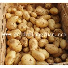 Patata fresca Buena calidad y precio competitivo
