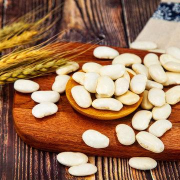 Haricots blancs de nouvelle récolte Vente chaude