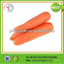 2014 Good Fresh Carrot