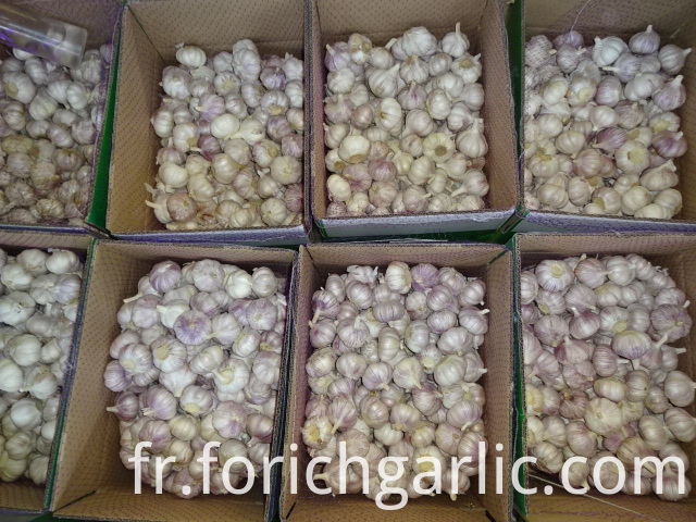 Fresh High Quality 2019 Normal Garlic