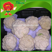 top grade cauliflower without residue fresh white broccoli