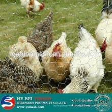 Cheap Chicken Wire/Hexagonal Wire Mesh