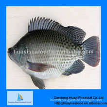 fresh frozen seafood tilapia fish