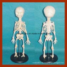 Hochwertiges Anatomie-Baby-Skelettmodell