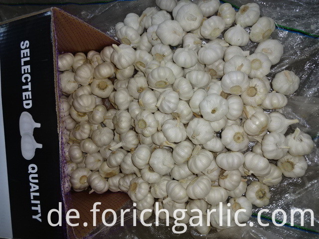 Pure White Garlic New