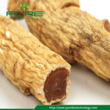Raiz Vermelha seca natural do Ginseng de Panax