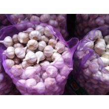 Normal White Garlic 4.5cm