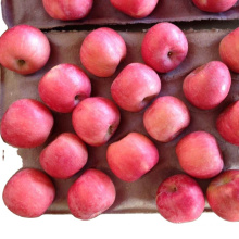 plastic bagged fuji apple fresh fruit red Fuji apple with good taste