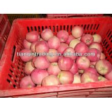 exportation frais rouge délicieux pomme fruit pomme fraîche