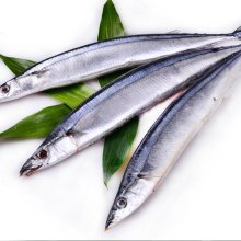Intero Round Sea Frozen Pacific Saury