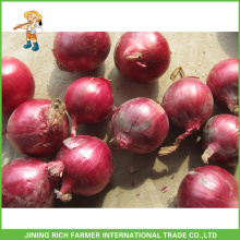Fresh Round Onions Red Or Yellow
