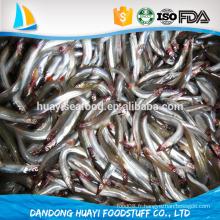 Bqf anchois fraîches congelées appâts de poissons capture locale