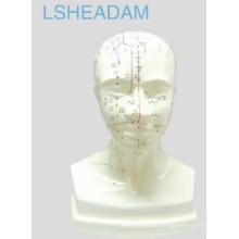 Modelo de cabeça de acupuntura