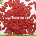 Fruit Product Buy Bulk Package Bayas de goji comunes