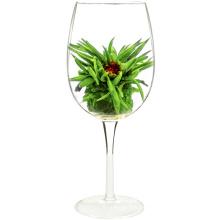 Estándar de la UE Hua Kai Fu Gui Jasmine Melocotón té blanco Primula floración té