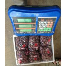 Nova colheita fresco vermelho global uva