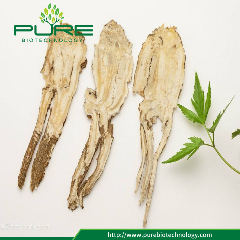 Dried Angelica Sinensis root slice