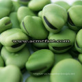 Productos populares Dry Broad Beans