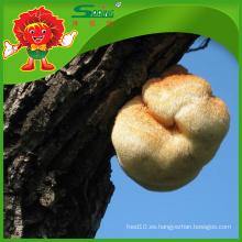Venta al por mayor Orgánica secado cabeza de mono Hongo Hericium Erinaceus