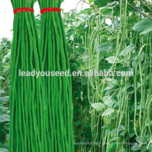 MBE03 Youqi high yield asparagus chinese long bean seeds company
