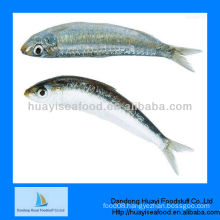 price of sardine fresh frozen seafood sardine fish