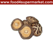 1kg dried Shiirtaki Mushroom